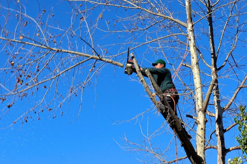 Contact Us-El Cajon CA Tree Trimming and Stump Grinding Services-We Offer Tree Trimming Services, Tree Removal, Tree Pruning, Tree Cutting, Residential and Commercial Tree Trimming Services, Storm Damage, Emergency Tree Removal, Land Clearing, Tree Companies, Tree Care Service, Stump Grinding, and we're the Best Tree Trimming Company Near You Guaranteed!