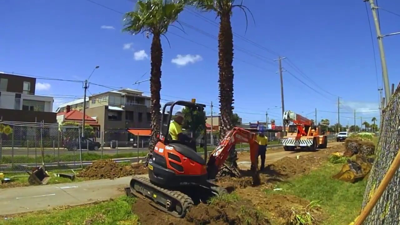 Palm Tree Removal-El Cajon CA Tree Trimming and Stump Grinding Services-We Offer Tree Trimming Services, Tree Removal, Tree Pruning, Tree Cutting, Residential and Commercial Tree Trimming Services, Storm Damage, Emergency Tree Removal, Land Clearing, Tree Companies, Tree Care Service, Stump Grinding, and we're the Best Tree Trimming Company Near You Guaranteed!