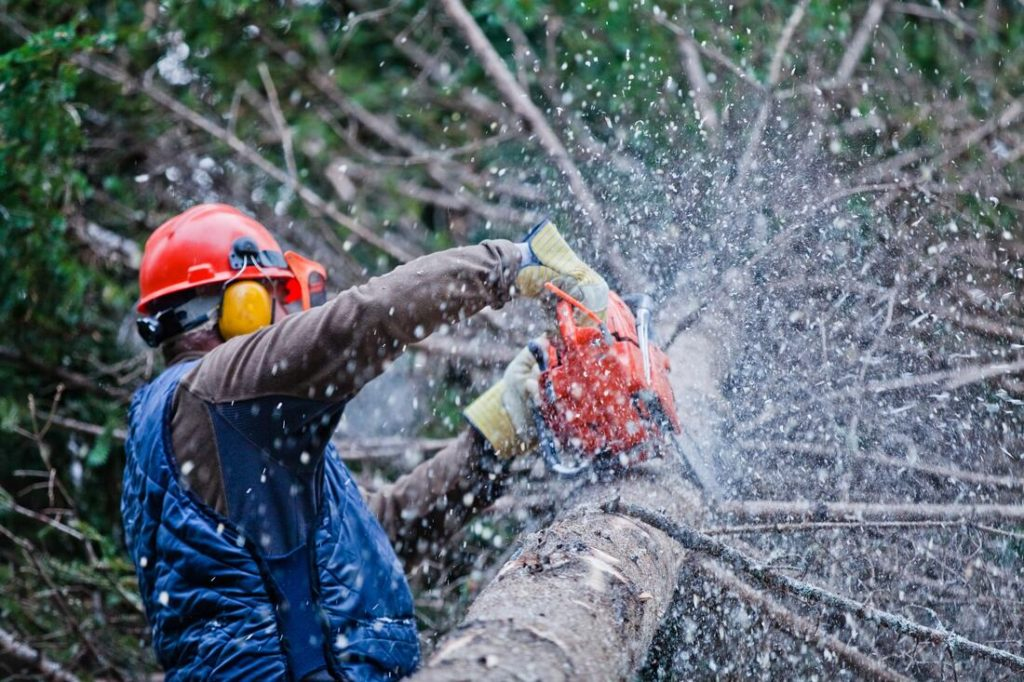 Rancho San Diego-El Cajon CA Tree Trimming and Stump Grinding Services-We Offer Tree Trimming Services, Tree Removal, Tree Pruning, Tree Cutting, Residential and Commercial Tree Trimming Services, Storm Damage, Emergency Tree Removal, Land Clearing, Tree Companies, Tree Care Service, Stump Grinding, and we're the Best Tree Trimming Company Near You Guaranteed!