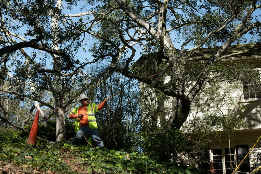 Santee-El Cajon CA Tree Trimming and Stump Grinding Services-We Offer Tree Trimming Services, Tree Removal, Tree Pruning, Tree Cutting, Residential and Commercial Tree Trimming Services, Storm Damage, Emergency Tree Removal, Land Clearing, Tree Companies, Tree Care Service, Stump Grinding, and we're the Best Tree Trimming Company Near You Guaranteed!