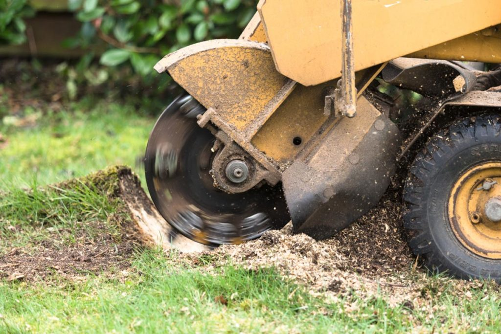 Stump Grinding-El Cajon CA Tree Trimming and Stump Grinding Services-We Offer Tree Trimming Services, Tree Removal, Tree Pruning, Tree Cutting, Residential and Commercial Tree Trimming Services, Storm Damage, Emergency Tree Removal, Land Clearing, Tree Companies, Tree Care Service, Stump Grinding, and we're the Best Tree Trimming Company Near You Guaranteed!