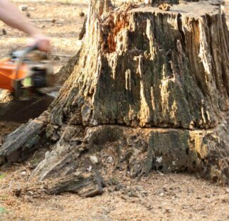 Stump Removal-El Cajon CA Tree Trimming and Stump Grinding Services-We Offer Tree Trimming Services, Tree Removal, Tree Pruning, Tree Cutting, Residential and Commercial Tree Trimming Services, Storm Damage, Emergency Tree Removal, Land Clearing, Tree Companies, Tree Care Service, Stump Grinding, and we're the Best Tree Trimming Company Near You Guaranteed!