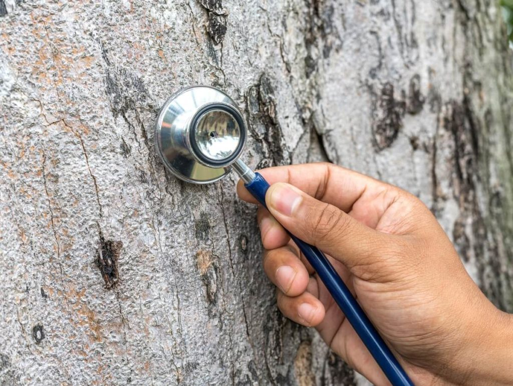 Tree Assessments-El Cajon CA Tree Trimming and Stump Grinding Services-We Offer Tree Trimming Services, Tree Removal, Tree Pruning, Tree Cutting, Residential and Commercial Tree Trimming Services, Storm Damage, Emergency Tree Removal, Land Clearing, Tree Companies, Tree Care Service, Stump Grinding, and we're the Best Tree Trimming Company Near You Guaranteed!