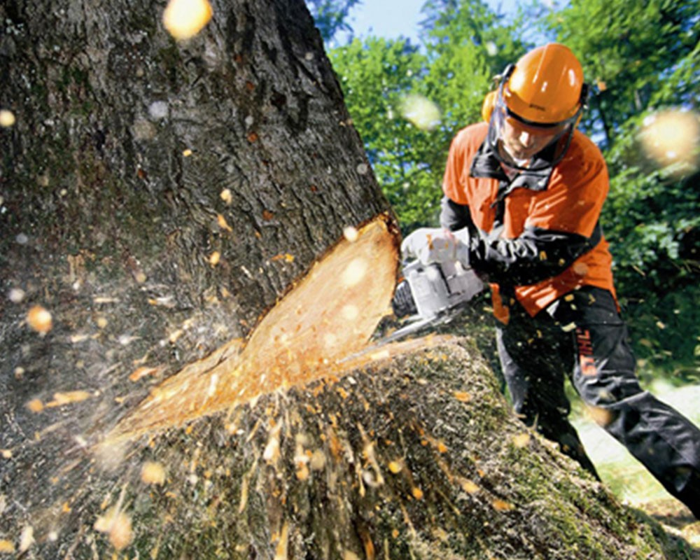 Tree Cutting-El Cajon CA Tree Trimming and Stump Grinding Services-We Offer Tree Trimming Services, Tree Removal, Tree Pruning, Tree Cutting, Residential and Commercial Tree Trimming Services, Storm Damage, Emergency Tree Removal, Land Clearing, Tree Companies, Tree Care Service, Stump Grinding, and we're the Best Tree Trimming Company Near You Guaranteed!