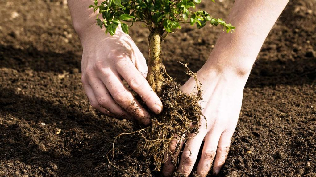 Tree Planting-El Cajon CA Tree Trimming and Stump Grinding Services-We Offer Tree Trimming Services, Tree Removal, Tree Pruning, Tree Cutting, Residential and Commercial Tree Trimming Services, Storm Damage, Emergency Tree Removal, Land Clearing, Tree Companies, Tree Care Service, Stump Grinding, and we're the Best Tree Trimming Company Near You Guaranteed!