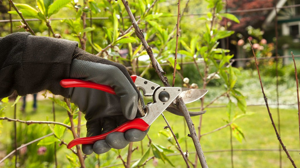 Tree Pruning-El Cajon CA Tree Trimming and Stump Grinding Services-We Offer Tree Trimming Services, Tree Removal, Tree Pruning, Tree Cutting, Residential and Commercial Tree Trimming Services, Storm Damage, Emergency Tree Removal, Land Clearing, Tree Companies, Tree Care Service, Stump Grinding, and we're the Best Tree Trimming Company Near You Guaranteed!